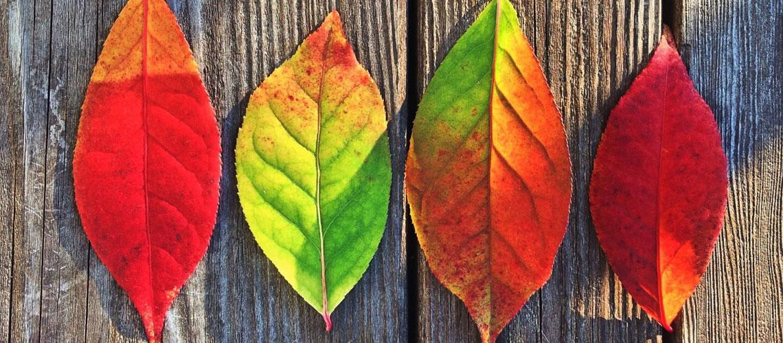Tolles Herbstzaubersortiment