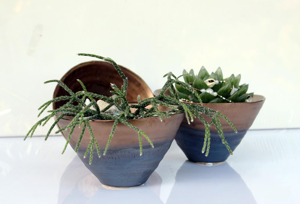 Sansiveria, grün, Pflanze